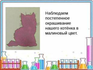 Наблюдаем постепенное окрашивание нашего котёнка в малиновый цвет.