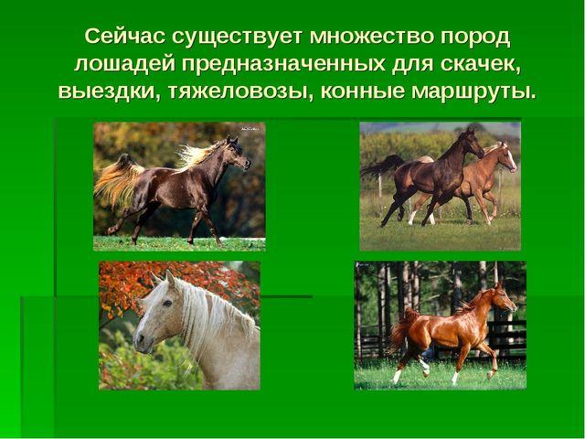 Сейчас существует множество пород лошадей предназначенных для скачек, выездки...