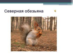 """Северная обезьяна Вопрос 1 """"Северная обезьяна"""" За проворство и умение быстро"""