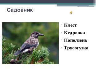 Садовник Клест Кедровка Поползень Трясогузка Вопрос2 «Садовник» С самого детс