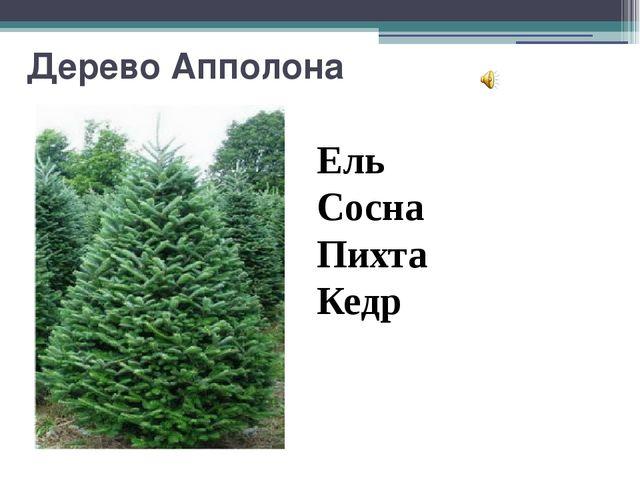 Дерево Апполона Ель Сосна Пихта Кедр Вопрос 3 Дерево Апполона Это дерево раст...