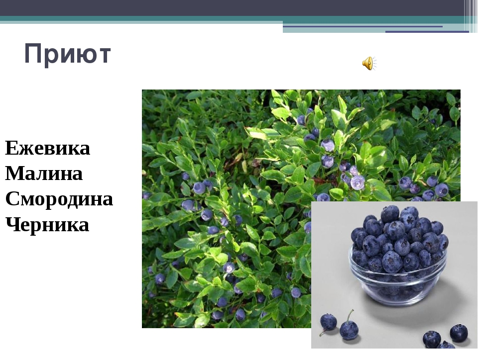 """Приют Ежевика Малина Смородина Черника Вопрос 5 """"Приют """" Согласно древней лег..."""