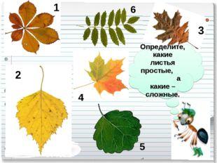 Определите, какие листья простые, а какие – сложные. 1 2 3 4 5 6