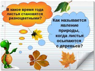 В какое время года листья становятся разноцветными? Как называется явление пр