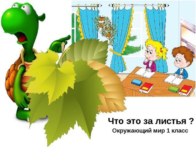 Что это за листья ? Окружающий мир 1 класс