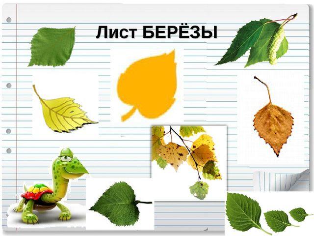 Лист БЕРЁЗЫ