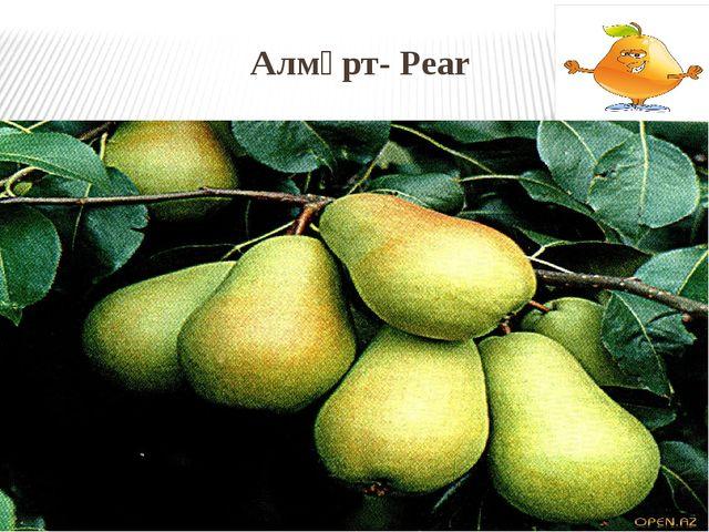 Алмұрт- Pear