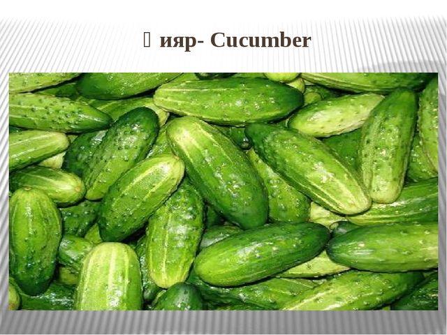 Қияр- Cucumber