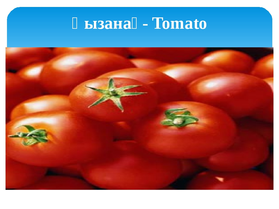 Қызанақ- Tomato