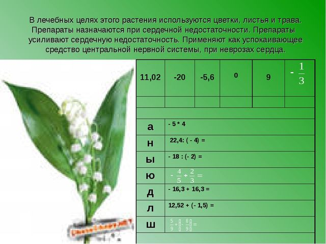 В лечебных целях этого растения используются цветки, листья и трава. Препарат...