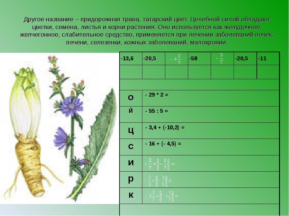 Другое название – придорожная трава, татарский цвет. Целебной силой обладают...