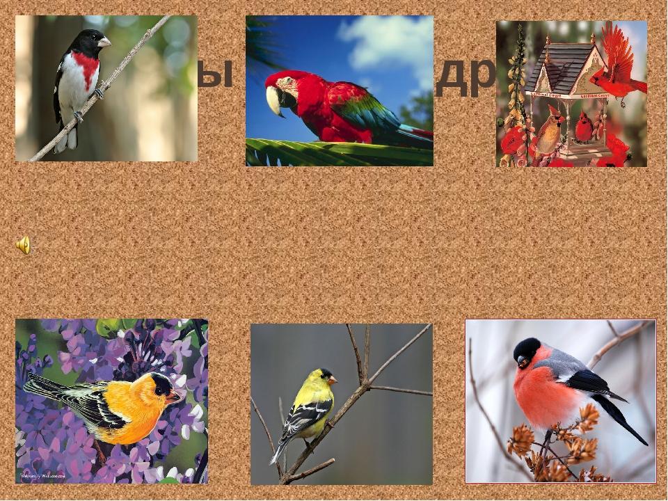 «Птицы – наши друзья»