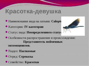 Красотка-девушка Наименования вида на латыни: Calopteryx virgo Категория: IV