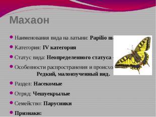 Махаон Наименования вида на латыни: Papilio machaon Категория: IV категория С