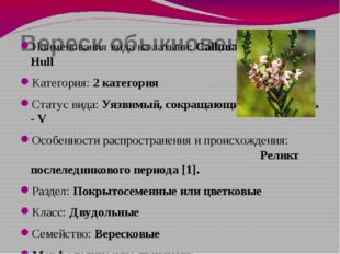 Вереск обыкновенный Наименования вида на латыни: Calluna vulgaris (L.) Hull К