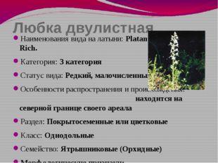 Любка двулистная Наименования вида на латыни: Platanthera bifolia (L.) Rich.