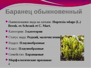Баранец обыкновенный Наименования вида на латыни: Huperzia selago (L.) Bernh.