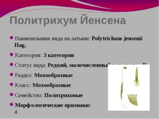 Политрихум Йенсена Наименования вида на латыни: Polytrichum jensenii Hag. Кат