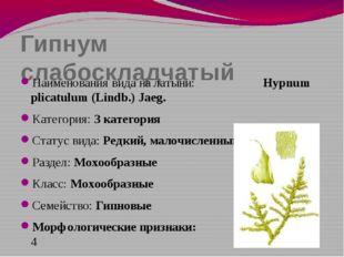 Гипнум слабоскладчатый Наименования вида на латыни: Hypnum plicatulum (Lindb.