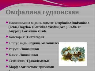 Омфалина гудзонская Наименования вида на латыни: Omphalina hudsoniana (Jenn.)
