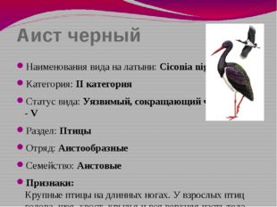 Аист черный Наименования вида на латыни: Ciconia nigra Категория: II категори