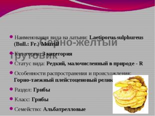 Серно-желтый трутовик Наименования вида на латыни: Laetiporus sulphureus (Bu