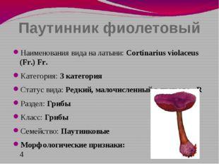 Паутинник фиолетовый Наименования вида на латыни: Cortinarius violaceus (Fr.)