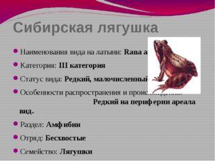 Сибирская лягушка Наименования вида на латыни: Rana amurensis Категория: III
