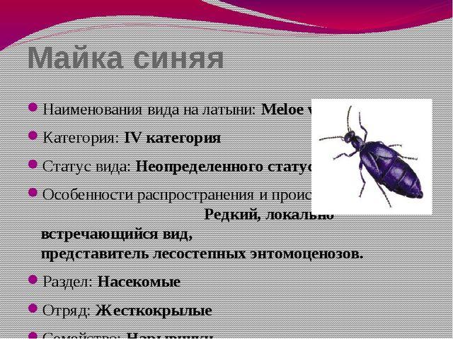 Майка синяя Наименования вида на латыни: Meloe violaceus Категория: IV катего...
