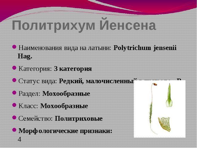 Политрихум Йенсена Наименования вида на латыни: Polytrichum jensenii Hag. Кат...