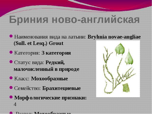 Бриния ново-английская Наименования вида на латыни: Bryhnia novae-angliae (Su...