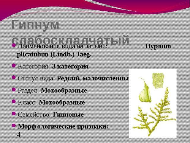 Гипнум слабоскладчатый Наименования вида на латыни: Hypnum plicatulum (Lindb....