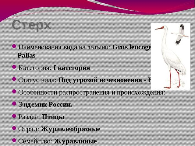 Стерх Наименования вида на латыни: Grus leucogeranus Pallas Категория: I кате...