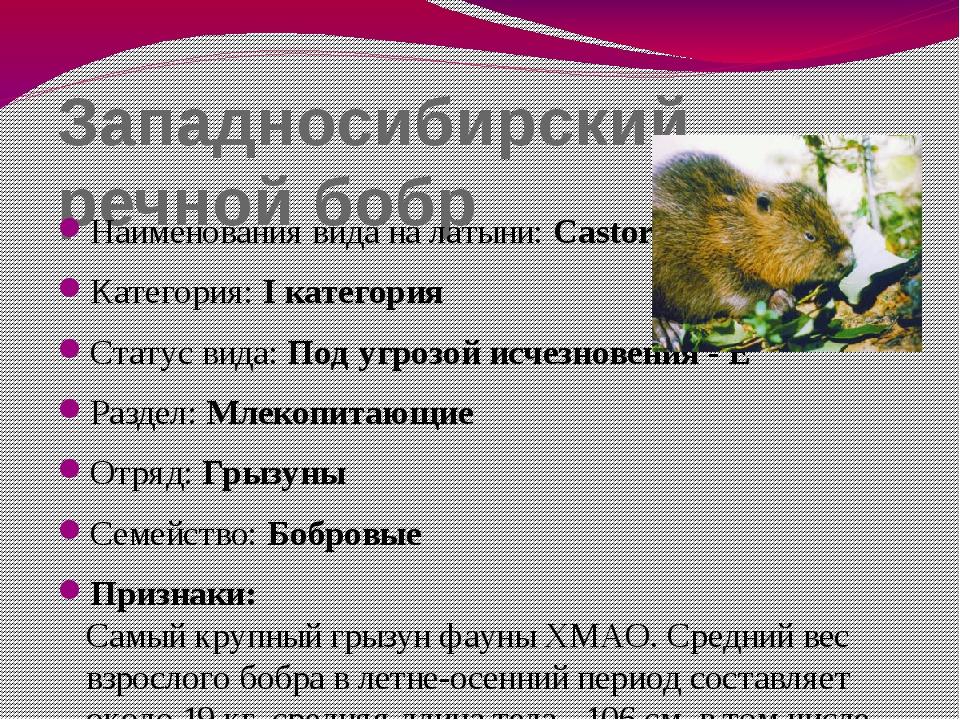 Западносибирский речной бобр Наименования вида на латыни: Castor fiber pohlei...