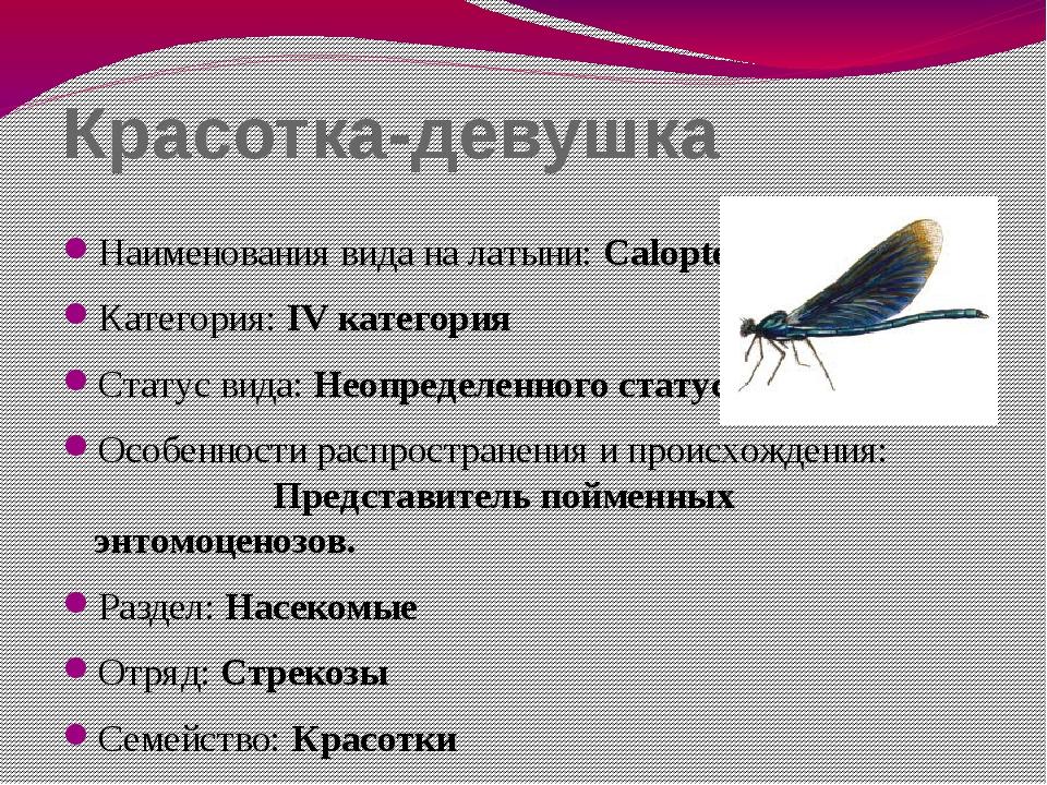 Красотка-девушка Наименования вида на латыни: Calopteryx virgo Категория: IV...