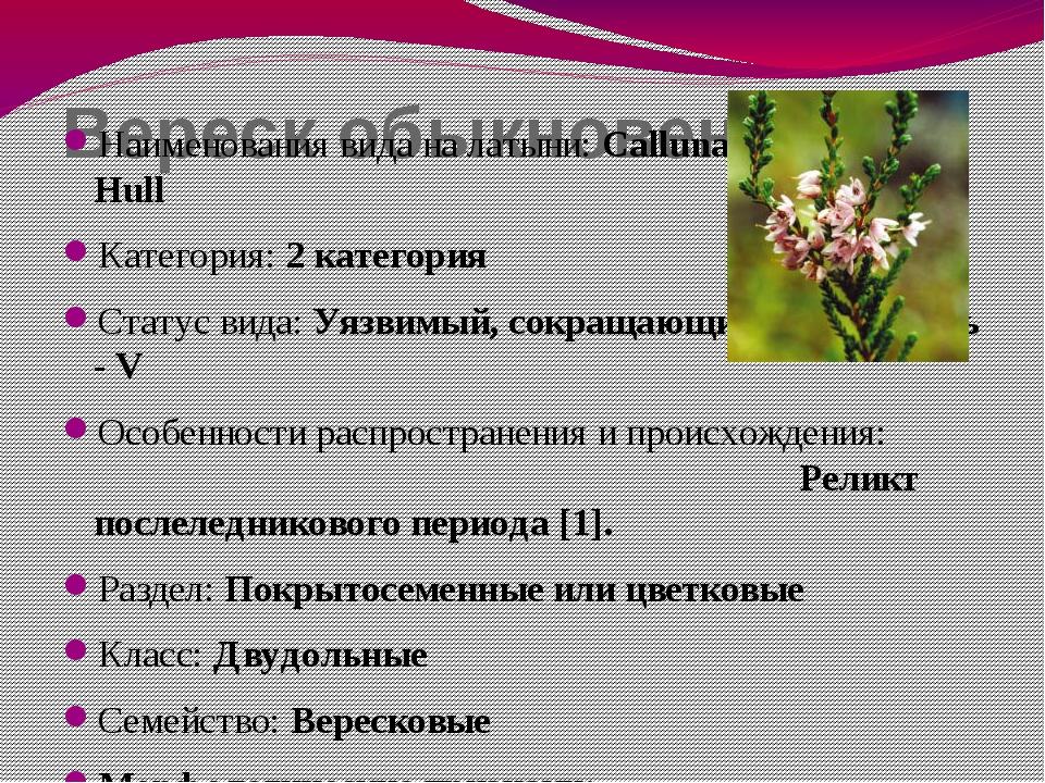 Вереск обыкновенный Наименования вида на латыни: Calluna vulgaris (L.) Hull К...