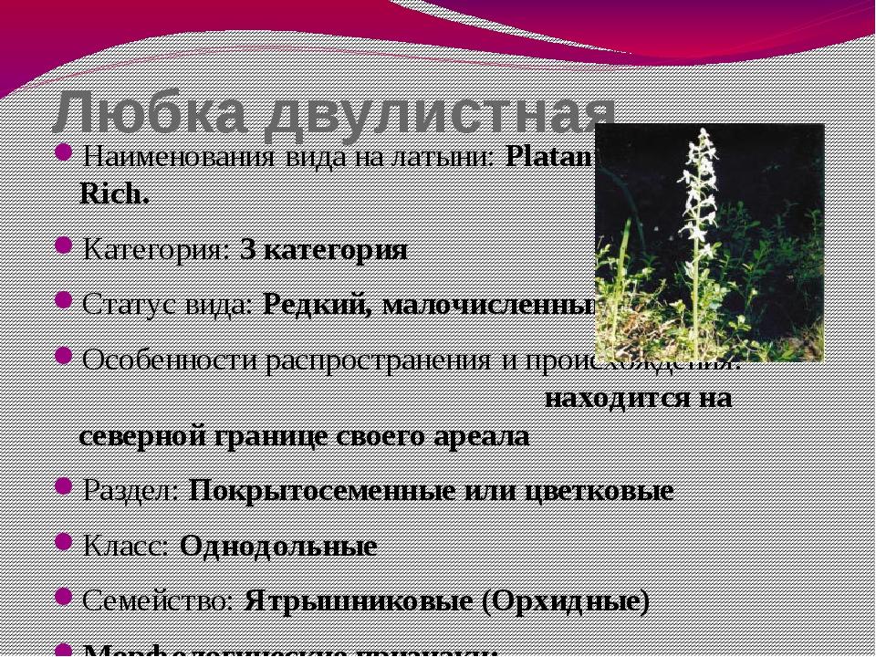 Любка двулистная Наименования вида на латыни: Platanthera bifolia (L.) Rich....