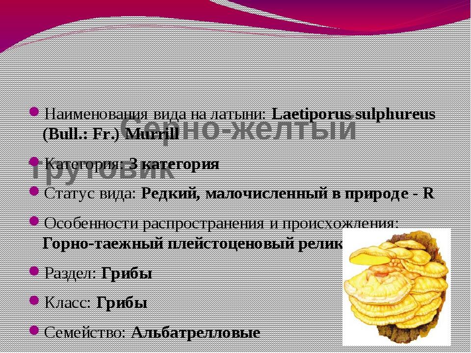 Серно-желтый трутовик Наименования вида на латыни: Laetiporus sulphureus (Bu...