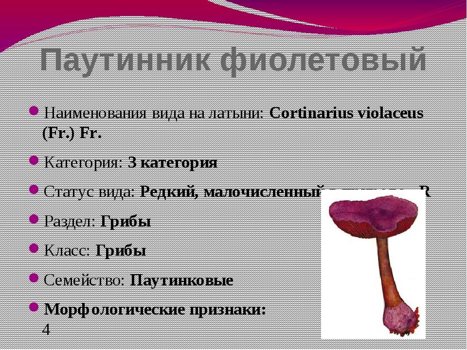 Паутинник фиолетовый Наименования вида на латыни: Cortinarius violaceus (Fr.)...