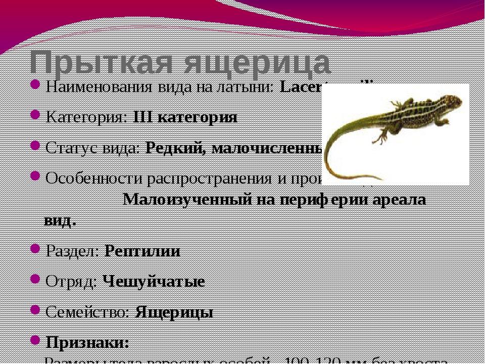 Прыткая ящерица Наименования вида на латыни: Lacerta agilis Категория: III ка...