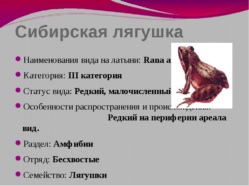 Сибирская лягушка Наименования вида на латыни: Rana amurensis Категория: III...