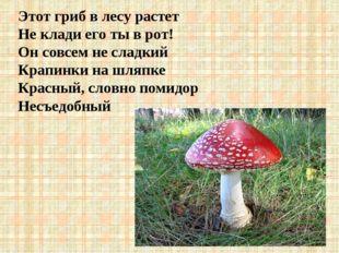 Этот гриб в лесу растет Не клади его ты в рот! Он совсем не сладкий Крапинки