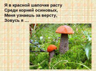Я в красной шапочке расту Среди корней осиновых, Меня узнаешь за версту, Зову