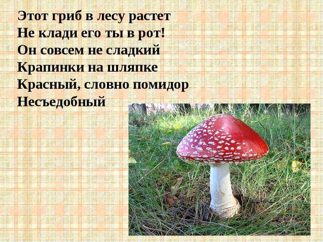 Этот гриб в лесу растет Не клади его ты в рот! Он совсем не сладкий Крапинки...