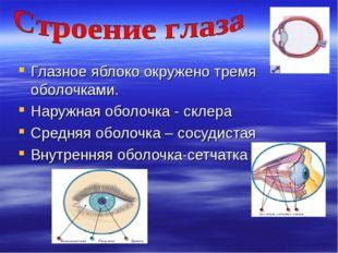 Глазное яблоко окружено тремя оболочками. Наружная оболочка - склера Средняя