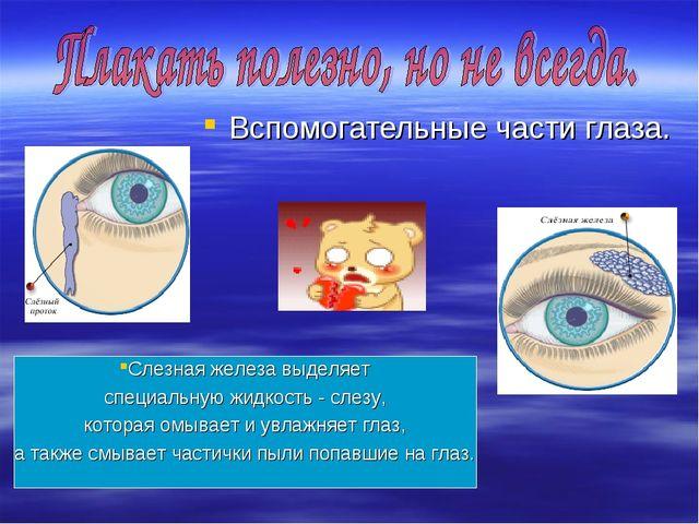 Вспомогательные части глаза. Слезная железа выделяет специальную жидкость - с...