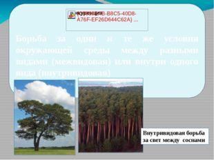 Борьба за одни и те же условия окружающей среды между разными видами (межвид