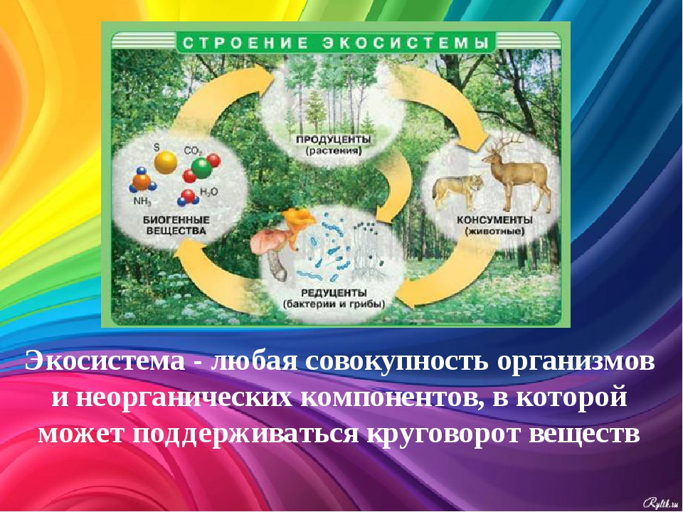 Экосистема - любая совокупность организмов и неорганических компонентов, в ко...