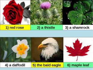 1) red rose 2) a thistle 3) a shamrock 4) a daffodil 5) the bald eagle 6) map