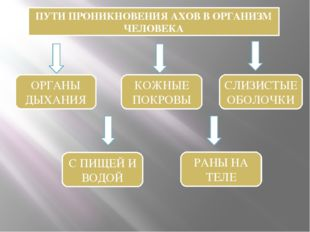 ПУТИ ПРОНИКНОВЕНИЯ АХОВ В ОРГАНИЗМ ЧЕЛОВЕКА ОРГАНЫ ДЫХАНИЯ КОЖНЫЕ ПОКРОВЫ СЛИ